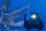ダイオウイカ再び! 『シリーズ深海の巨大生物』7月に2夜連続放送