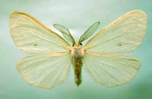 昆虫ガ類、豊田で新種続々