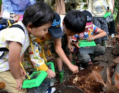 「小さな虫の世界知って」 福岡、昆虫発見ツアー