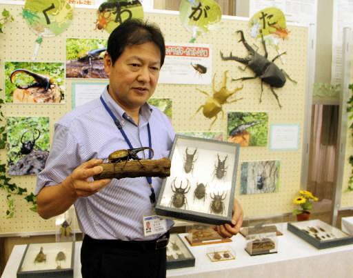 世界の昆虫 見に来て