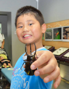 世界のカブト、クワガタ虫 生きた24種類展示