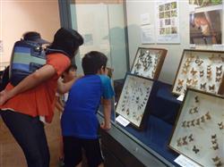千葉・八千代の郷土博物館で世界の昆虫展 「日本一」も集合