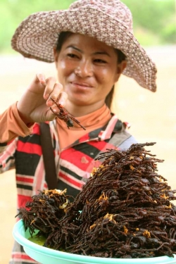 「昆虫食」を国連が推奨 食糧問題に対処